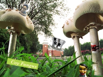 Coy Fungus, by Joby Knotts on OurStage