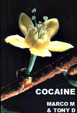 (THE VIDEO) COCAINE- MARCO M & TONY D, by MARCO M & TONY D on OurStage