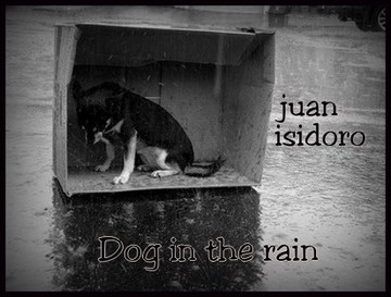 Dog in the rain, by kathyjuan band on OurStage