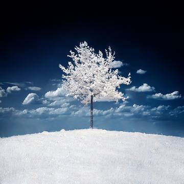 White Tree, by Gelgitler on OurStage