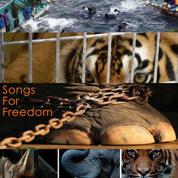 Pain, by Songs For Freedom on OurStage