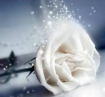 White Rose Blossoming, by Kathryn Toyama on OurStage