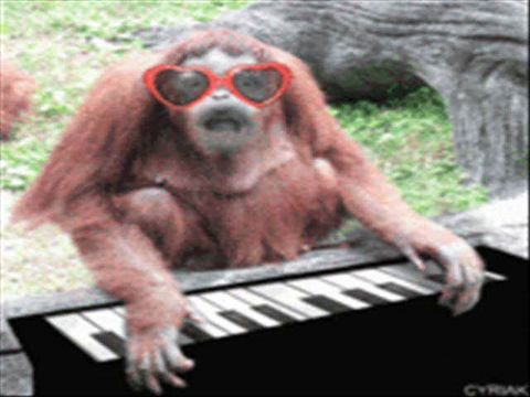 funny monkey sounds, by steck on OurStage