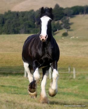 Clydesdale Pony, by Nick Wilsden on OurStage