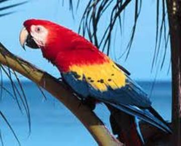 Parrot Life In Paradise, by Brian Jasper on OurStage