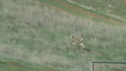 Deer Games, by Chuck Jordan on OurStage