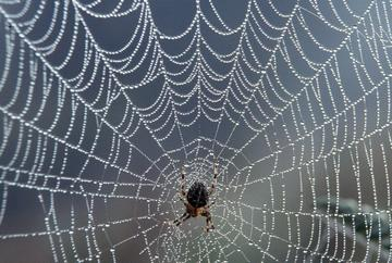 Spider in my Web, by Guitar Cat and the Prowlers on OurStage