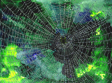 Anatomy of a Spider Web, by charleyG on OurStage