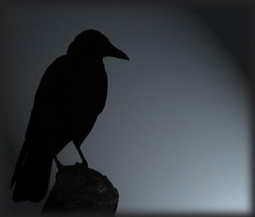 Sayeth The Crow, by Buddy Kelly on OurStage