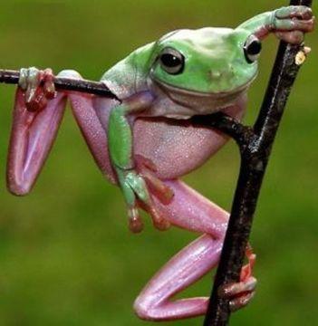 Prog Frog, by Erdal Kemahli on OurStage
