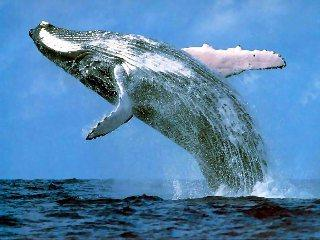 A Whale's Prayer, by Helder Rock on OurStage