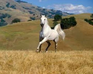 White Horse, by Johnny Croot on OurStage