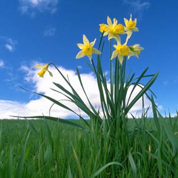 Flourish Spring, by Mikle Krizanovski on OurStage