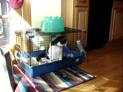 Cat in rabbit cage, by eek541 on OurStage