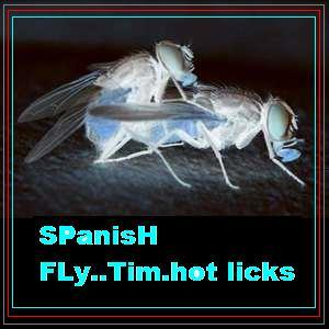 """SpAniSH FLy , by TIM """" Hot licks """" on OurStage"""