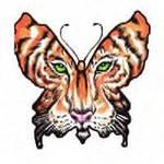 Tiger Butterfly, by ToniLee 1 on OurStage