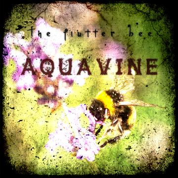 The Flutter Bee, by AQUAvine on OurStage