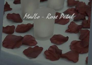 Rose Petal, by MaJLo on OurStage