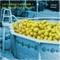 Let's Make Lemonade, by Gabriel Koenig on OurStage