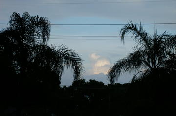 Palm Trees In My Backyard, by maggie council on OurStage