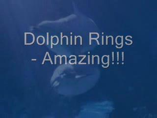 Dolphin Rings (featuring Indigo Summer), by Chuck Jordan on OurStage