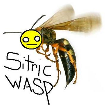 Sitric Wasp, by MatchBook-Auto on OurStage