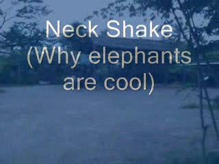 Why Elephants are Cool, by Chuck Jordan on OurStage