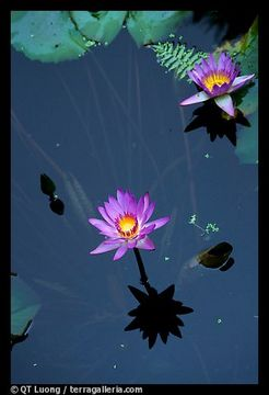 Lotus, by Nita Chawla on OurStage